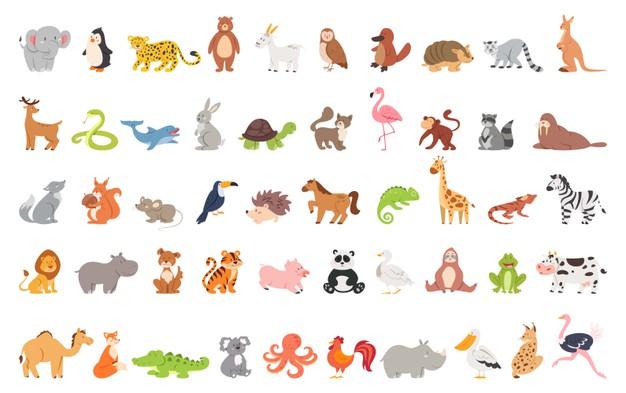 từ vựng về con vật