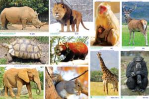 các loài động vật trong tiếng Anh
