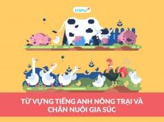 Chăn nuôi gia súc tiếng Anh